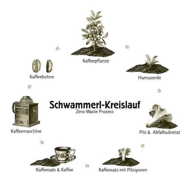Hut und Stiel - Schwammerl Kreislauf