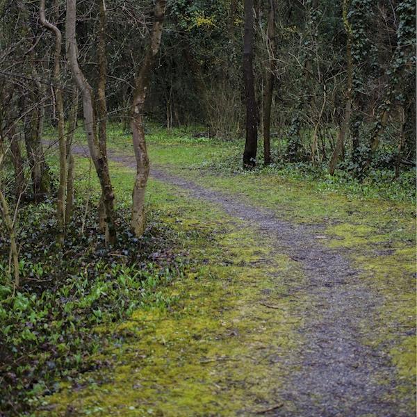 Kräuter sammeln entlang von Waldwege
