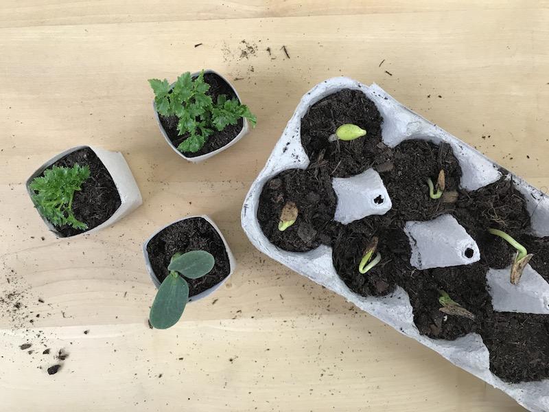 4 Ideen für Upcycling Anzuchttöpfe
