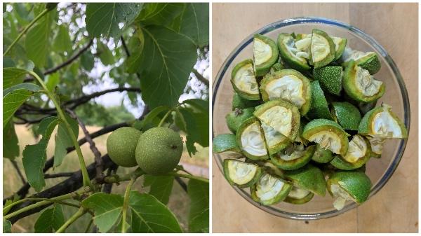 Grüne Nüsse ernten & schneiden