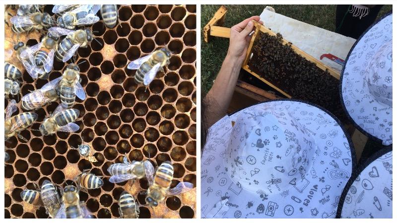 Die Bienenvölker von honigbub
